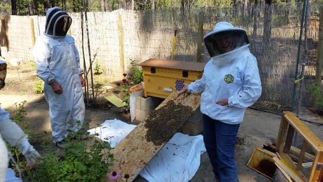 apiaries near me